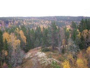 skog_01